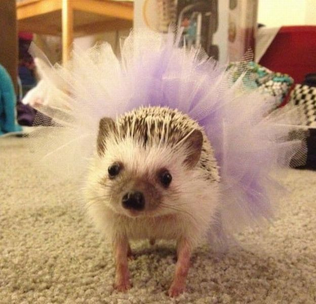 http://www.velvet.by/files/userfiles/14735/hedgehogs1.jpg