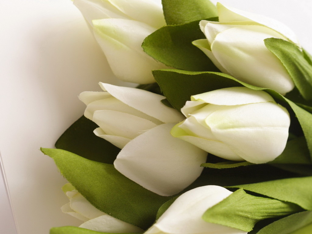 http://www.velvet.by/files/userfiles/1653/nature_flowers_white_tulips_032263_.jpg
