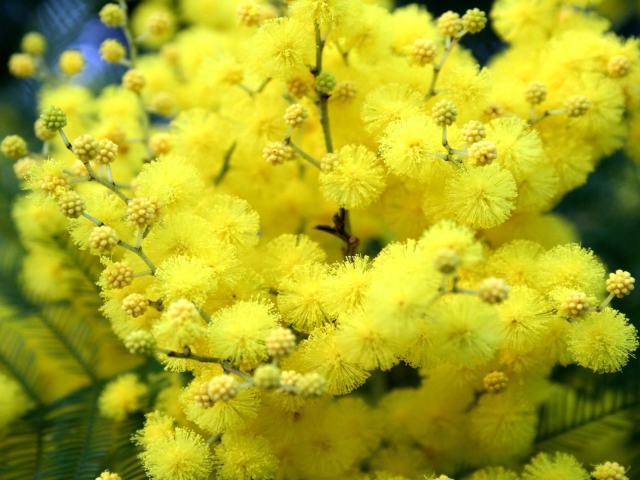 http://www.velvet.by/files/userfiles/327/nature___flowers_yellow_flowers_in_the_spring_042392_29.jpg