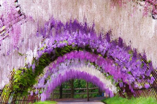 28-wisteria20tunnel.jpg